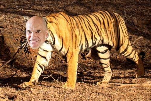 Jon Tiger